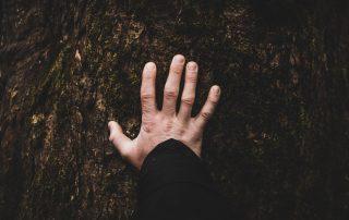 main sur un arbre